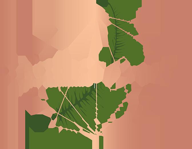 Cachet Creative